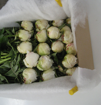 Peonies ready to ship