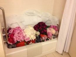 Where did all the peony bouquets come from? Checked luggage of 400 peonies and kept them in my hotel bath tub.