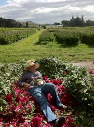 A hard day of deadheading in New Zealand.