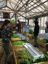 Helping out at the Homer High School Greenhouse.